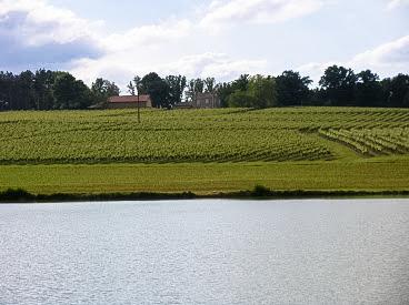 Domaine de Bassail - vignes